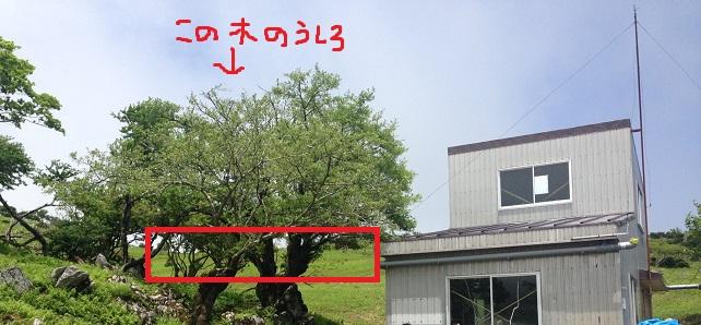 藤原岳のテントスポット