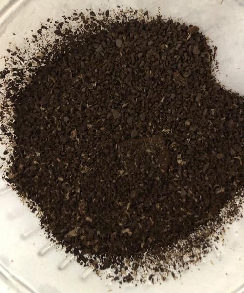 メキシココーヒーの豆